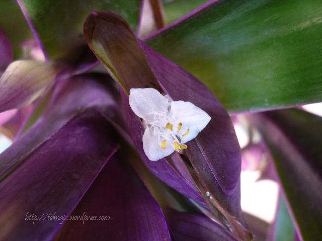 Maguey o agave: conoce sus increbles BENEFICIOS y usos 78