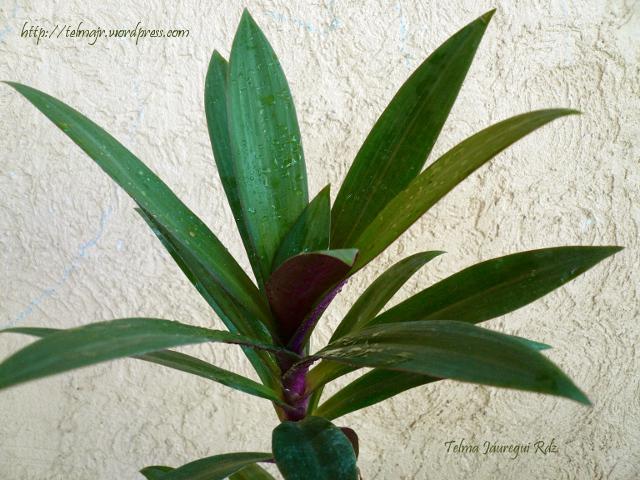 botánica | Espacio de Telma | Página 6